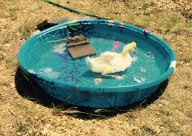 Roman-big-pool