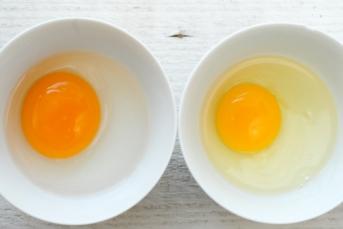 chicken vs duck yolk