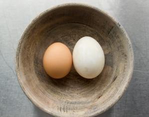 chicken_vs_duck