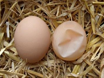 soft shelled eggs