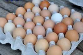 egg flats