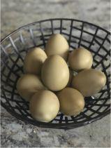 WTG-EggColor