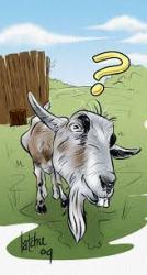 goat question