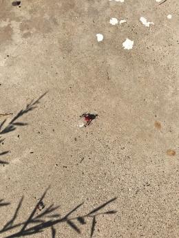 ant teamwork
