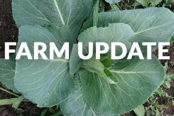 farm_update_f4182b9c-fc3b-4d96-b2fe-922e15beb67f_2048x