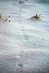 a little mouse making tracks