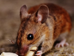 how-to-get-rid-of-mice-770x360