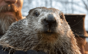 AP_Groundhog2.20-1200x768