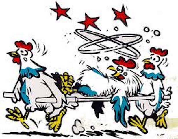 chicken-on-stretcher