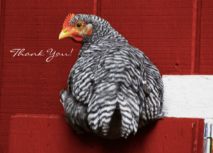 Chicken-Turn-Around-Thank-you-Card-Pic