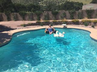 geese pool